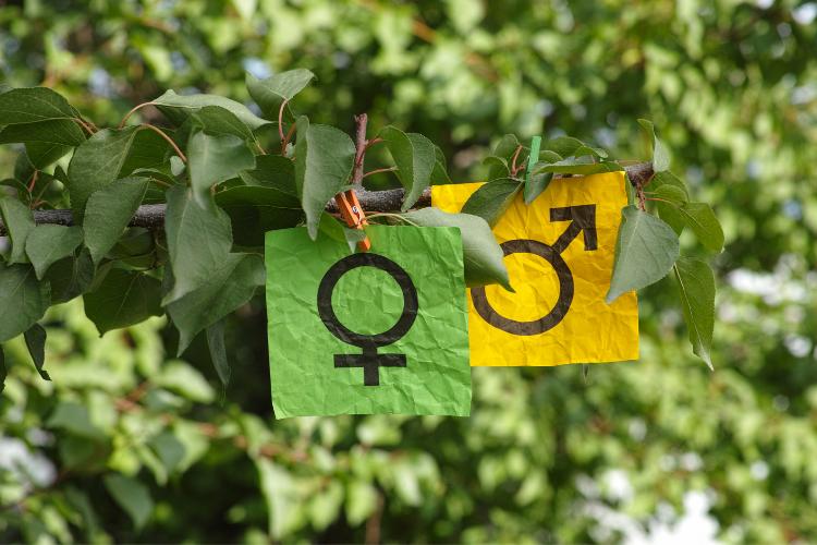 Женский род прилагательных во французском языке. Особые формы французских прилагательных